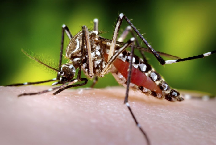 10. Aren't the mosquitos the size of footballs?