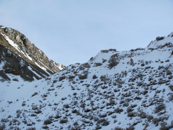 5. If you look closely, you'll see a hiker enjoying this beautiful winter day in Steamboat Springs.