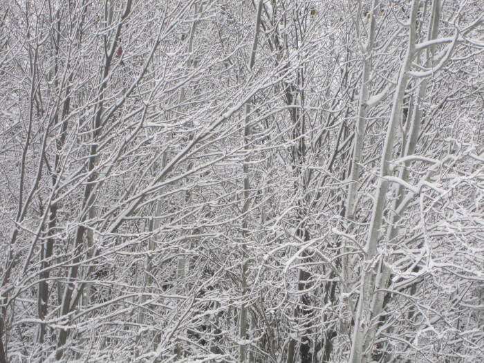 1. Nothing is more beautiful than the snow covered trees in MN.