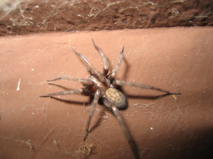 3. Running into the wrong spider can ruin your day, and cause your flesh to rot...ewww.