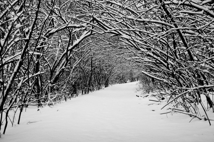 9. Snow covered trees.