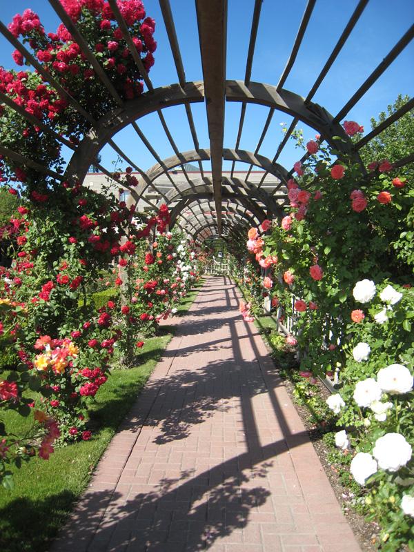 4. Thanksgiving Point Rose Garden