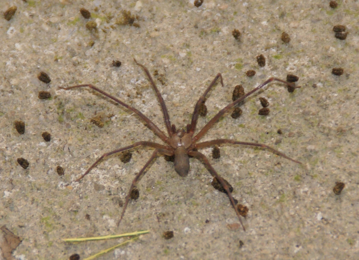 3. Speaking of spiders, you could also get bitten by the Brown Recluse.
