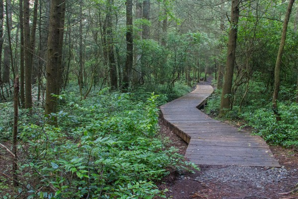 11. Pink Beds Loops, Pisgah National Forest