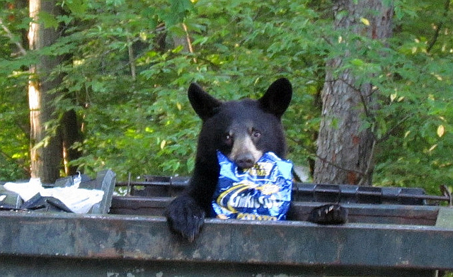 9. Bears who invite themselves to your family picnic