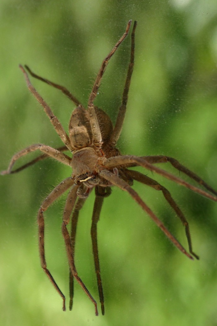 6. Spiders