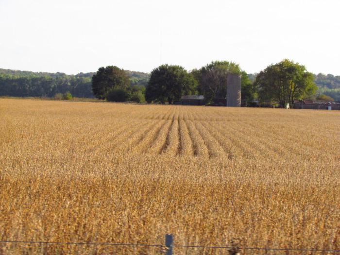 2. I'll admit it; Kansas has A LOT of golden fields of wheat.