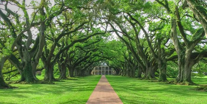 10. Oak Alley Plantation