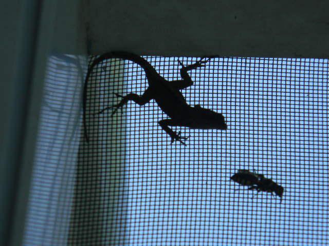 12. Things like bugs and lizards don't faze you.