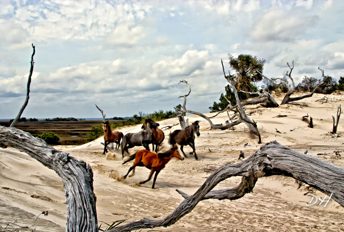 5. Cumberland Island National Seashore, GA
