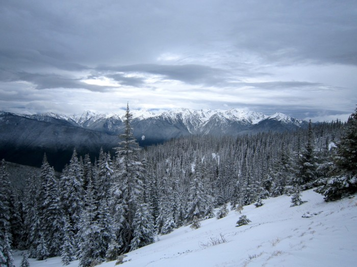 2. A stunning winter shot of Hurricane Ridge in the Olympic National Park.