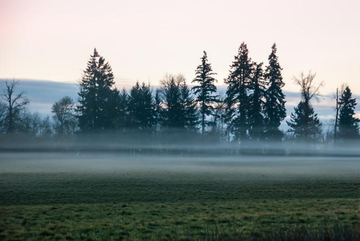 9. The fog