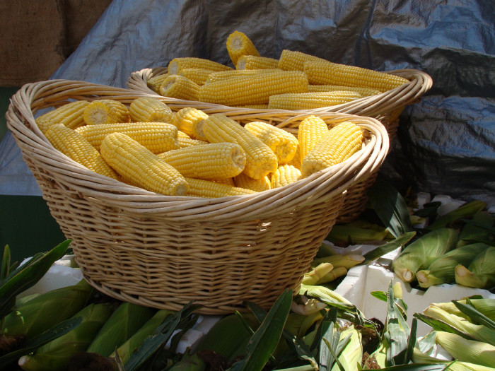 6. You have extremely high standards for sweet corn.