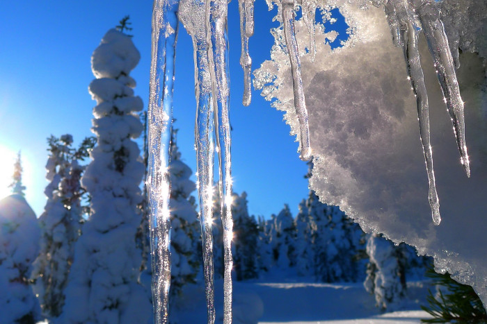 6. Gorgeous icicles glistening in the sunlight.