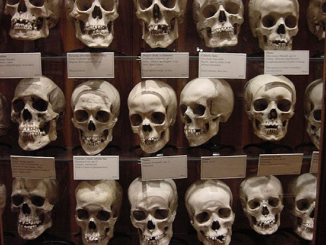 1. Get creeped out at the Mütter Museum in Philadelphia.