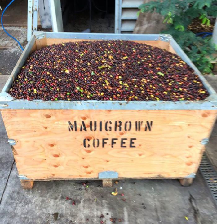 7) MauiGrown Coffee, Lahaina