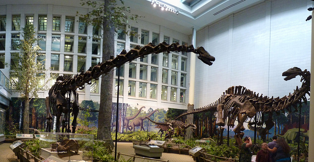 20. Carnegie Natural History Museum, Pittsburgh