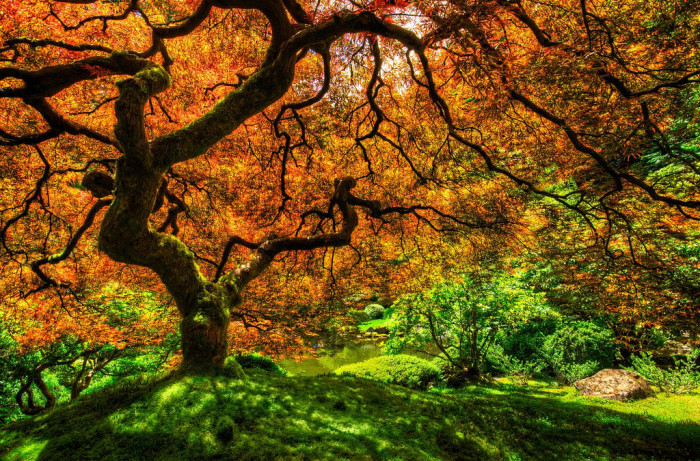 11. Portland Japanese Garden