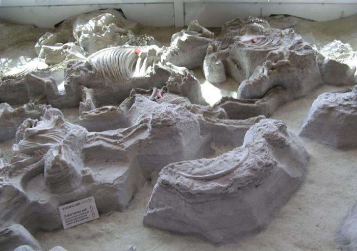 3. Ashfall Fossil Beds, Royal