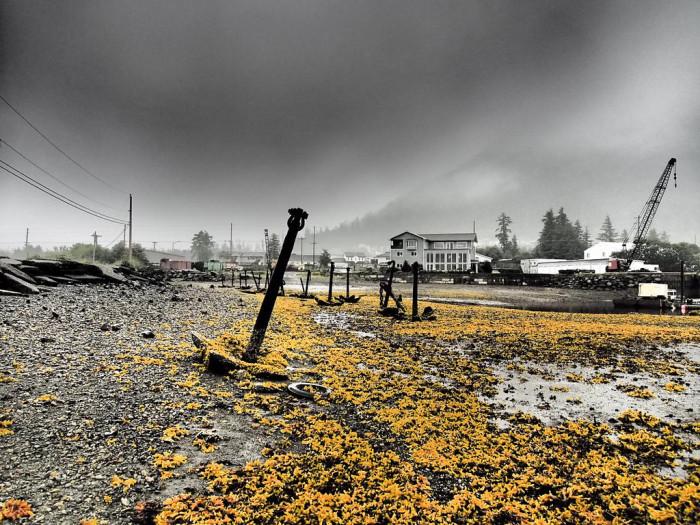 5) The haunting Sitka shoreline.