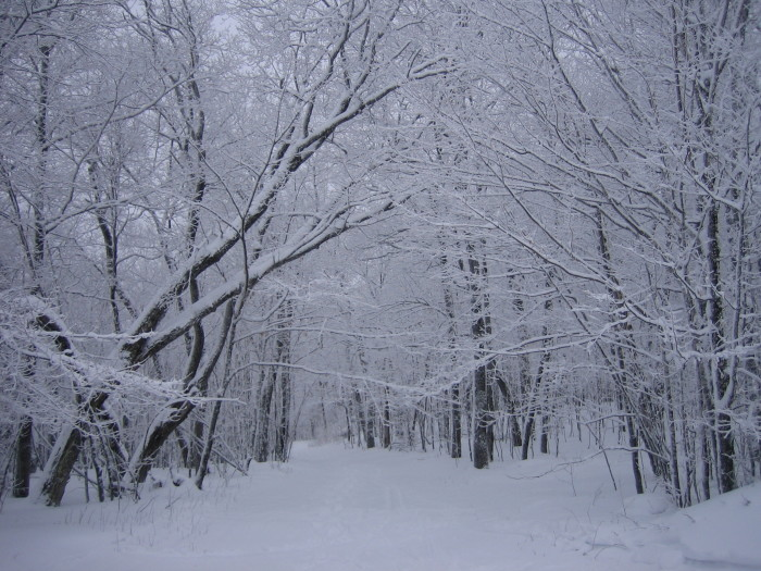 10. And on the other three sides, Lutsen is surrounded by beautiful snowy forest.