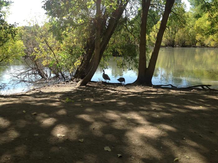 11. Beus Pond