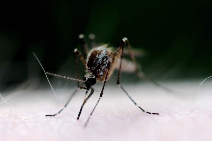 8. Mosquitoes