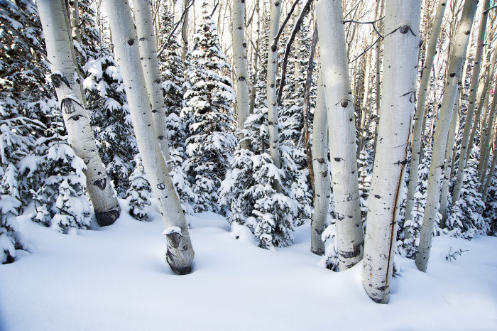 15. Utah Powder