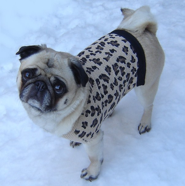 2. Both you and your pets get to dress up in cute sweaters!