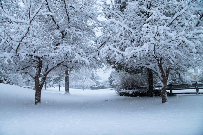 4. Walking in a real life winter wonderland!