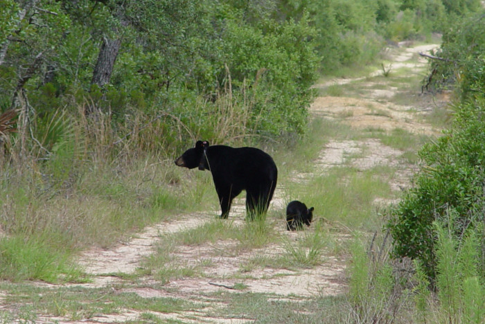 5. Bears