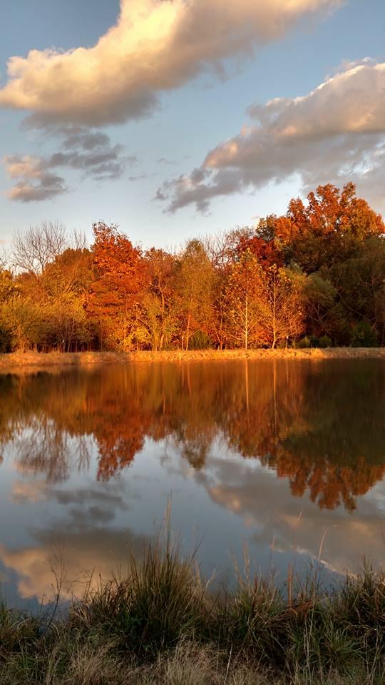 "9.""My pond reflecting the fall foliage.  Near Kingsville."" By Rita Hutchings Larson."