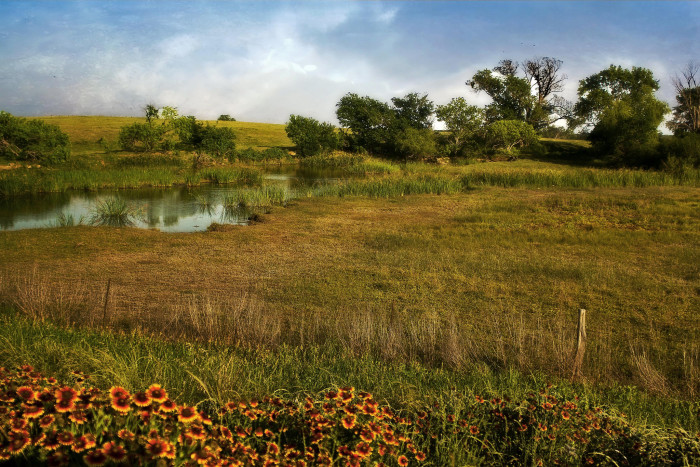 3) This quiet pasture with a small pond cutting through the grassland looks unbelievably peaceful.