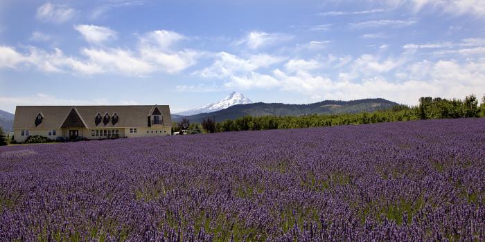 12. Hood River Lavender Farm
