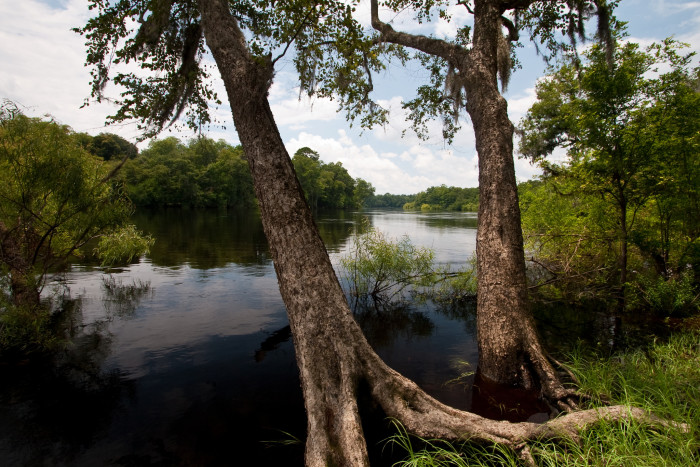 Of Floridas Most Relaxing Rivers - Florida rivers