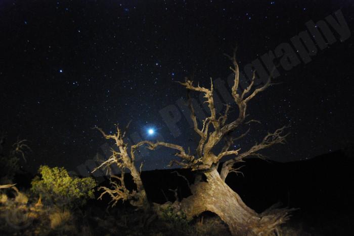 6) A tree near the top of Mauna Kea seems otherworldly.