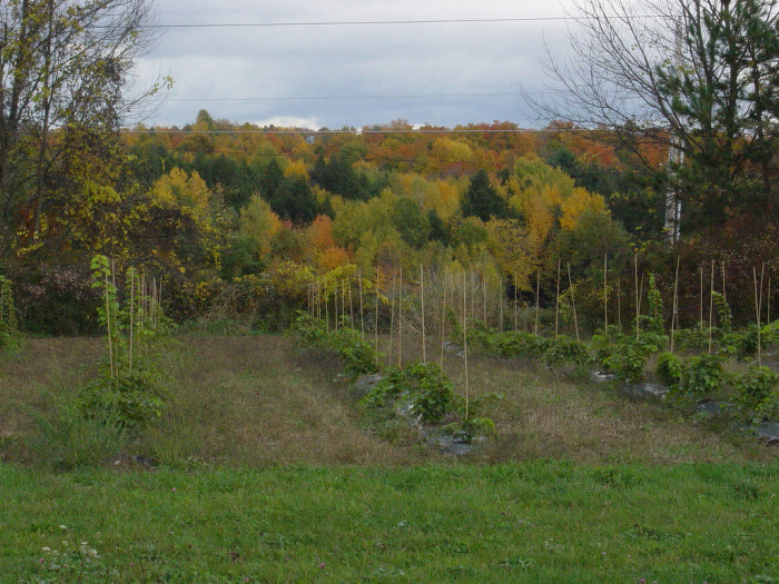 2.  Charlotte Village Winery - 3968 Greenbush Road, Charlotte, VT