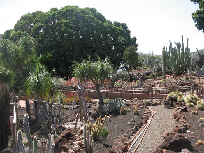 3) Cactus Garden