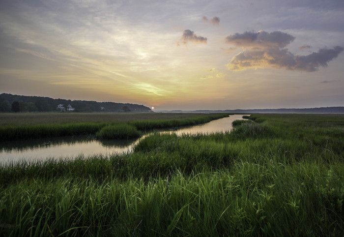 Chincoteague wetlands