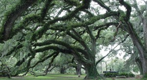11 Reasons We Are Thankful For Living In Louisiana