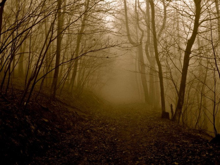 12.Through the fog, this fireroad through the Blue Ridge Mountains looks like something from an Edgar Allan Poe story.