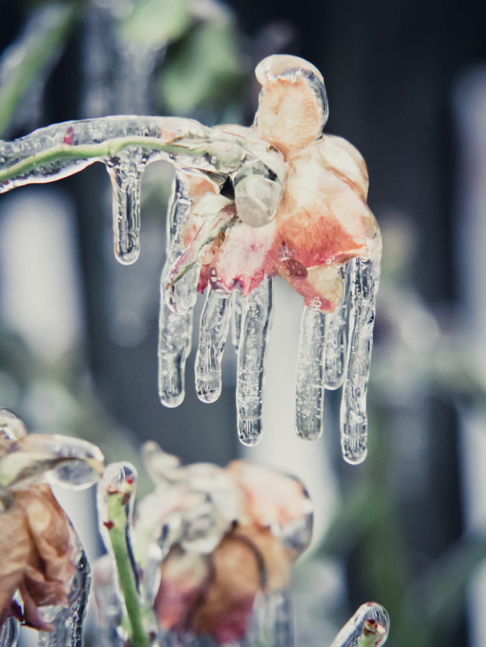16. Moments of mind bending magic like this one after an ice storm in Manassas.