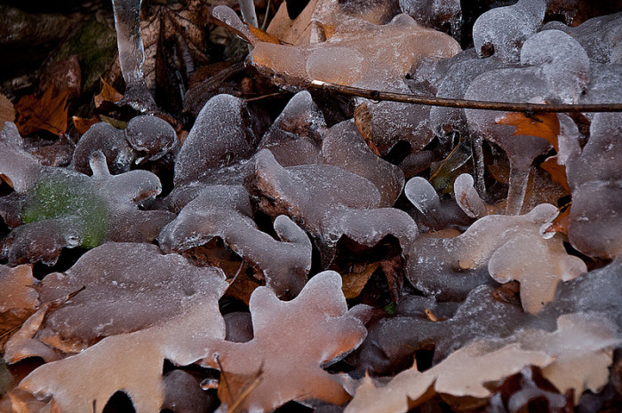 3.  Iced Leaves