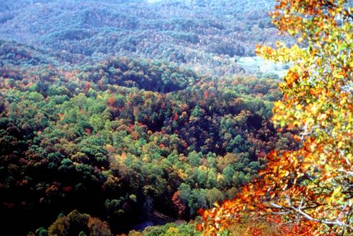 4. Kentucky Ridge Forest