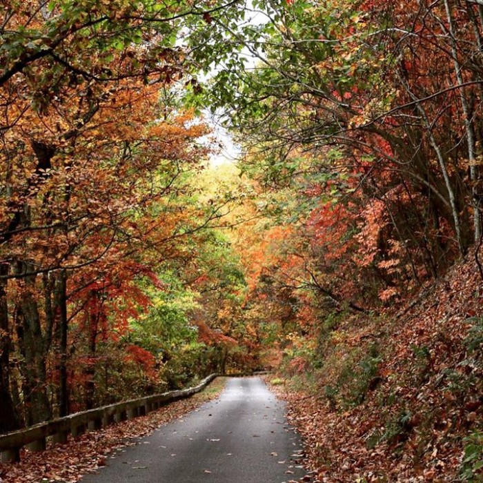 13. This is the kind of road you could get lost on and not mind one bit. This beautifully composed image was sent in by Cheryl Bunton Fowler.