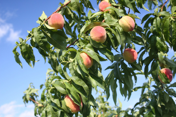 7. Money cache and peaches