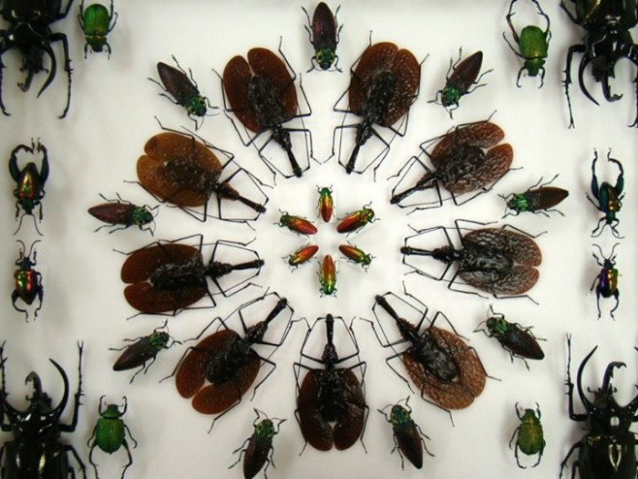 4. Insectropolis, Toms River