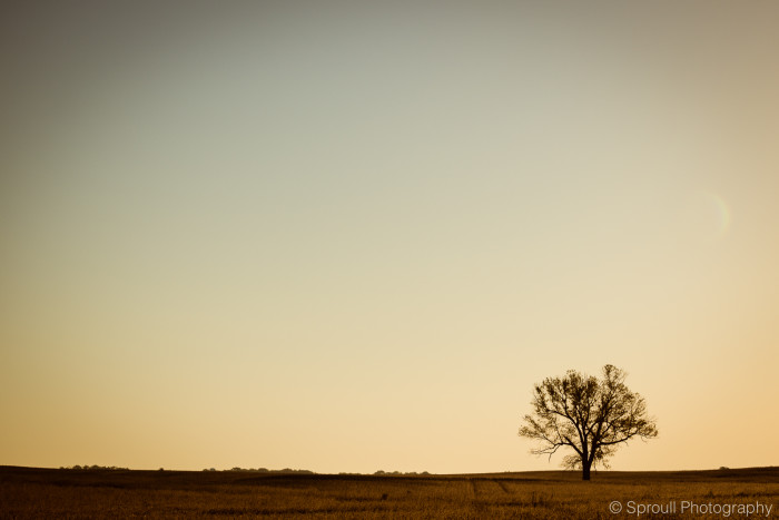 14. I've decided to leave you with this lonely tree in Franklin. Doesn't it just look sad and alone? Poor tree!