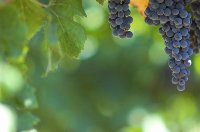SE Michigan Pioneer Wine Trail