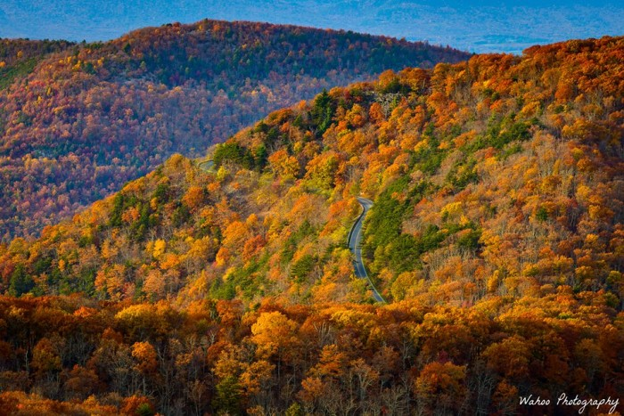 7. THIS is why Skyline Drive is one of the most visited roads in the state. Wahoo Photography captures the beauty and splendor of the drive to a tee.